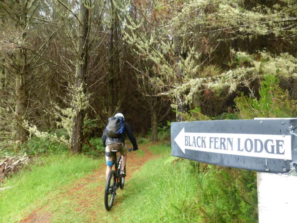 Timber Trail route to Black Fern Lodge