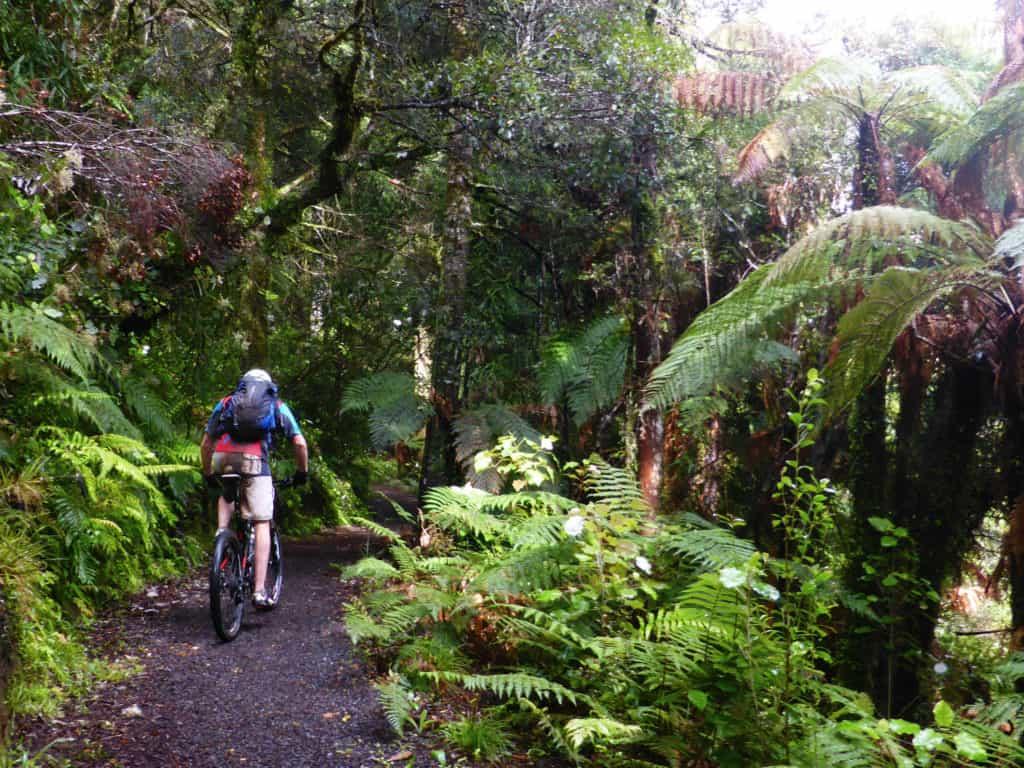 Timber Trail Bush