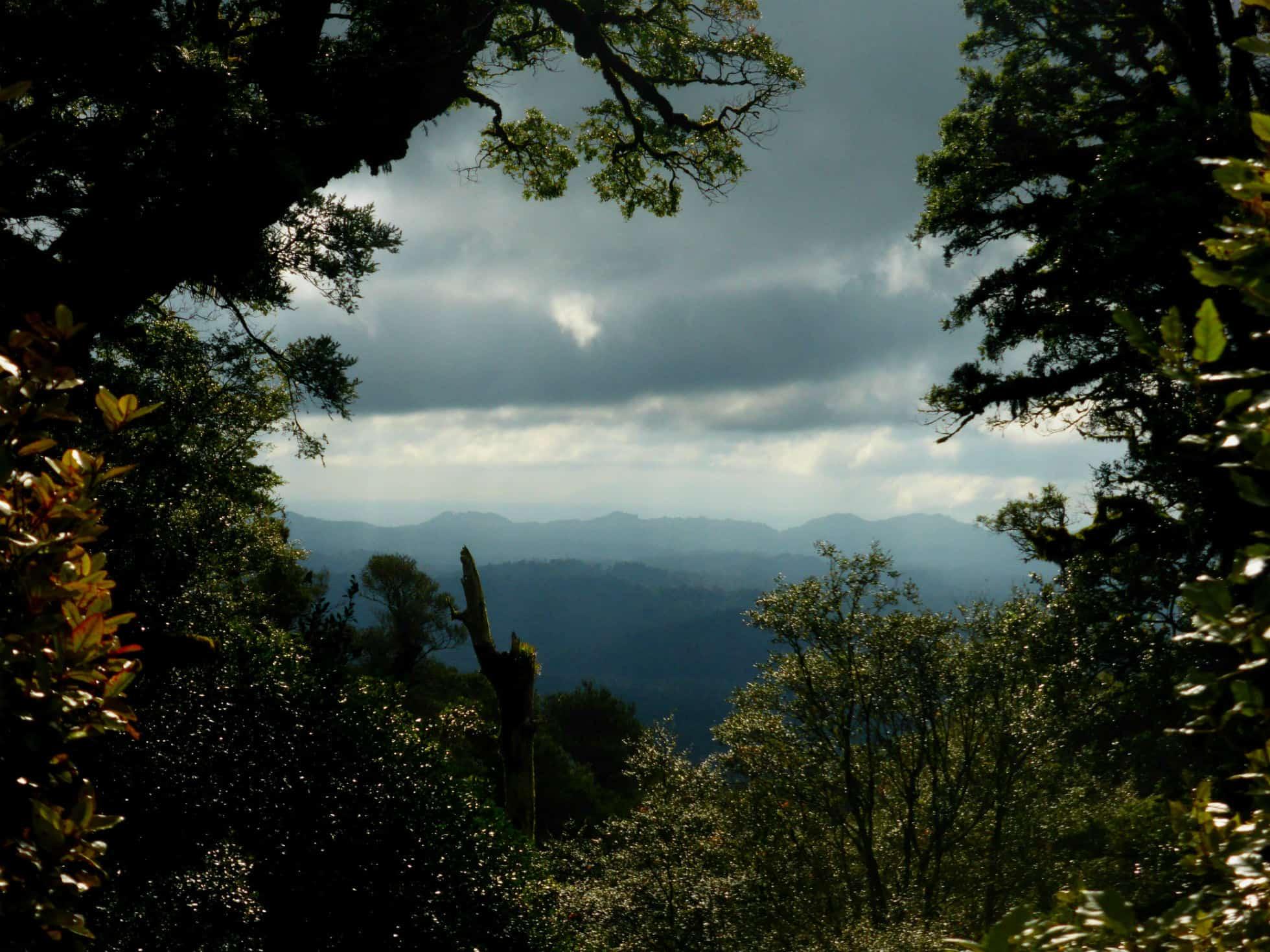 Moerangi Track – Adventure Ride